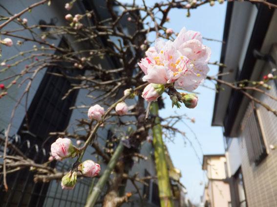 blog1416-1.jpg